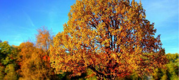 Termine im Herbst